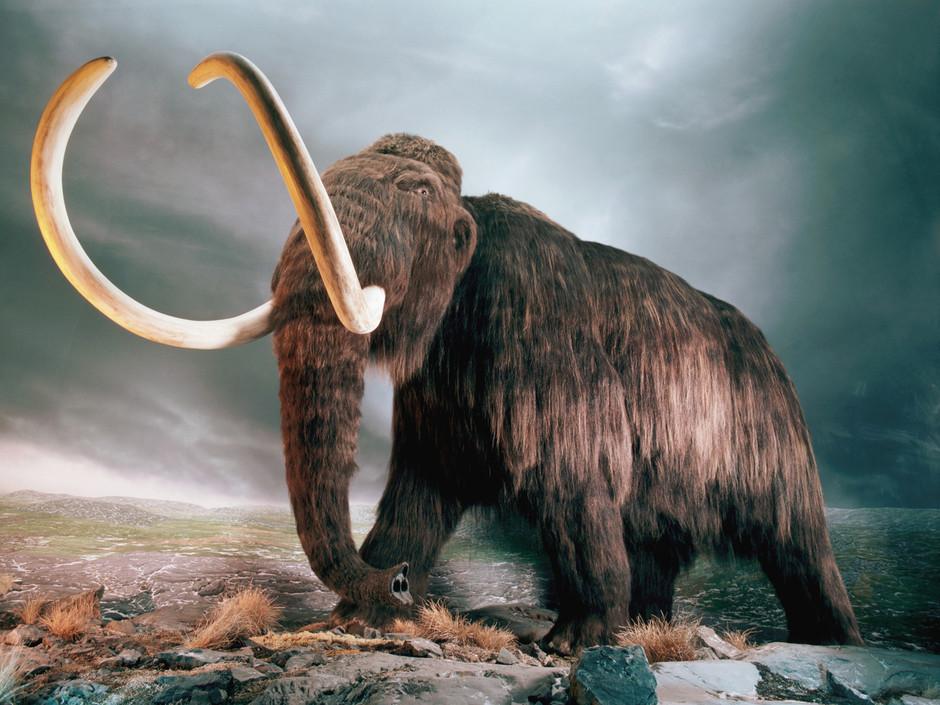 mammouth - animal buzzz