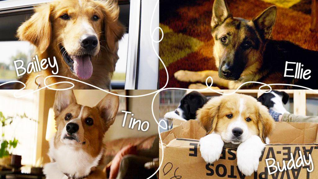Mes vies de chien - film coté ciné - animalbuzzz